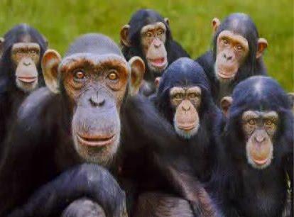la-storia-delle-cinque-scimmie-L-5Elfud